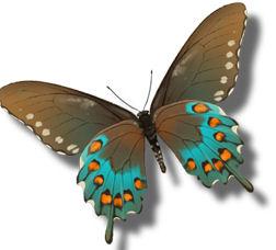 La vie des papillons le blog de michelotte - Duree de vie papillon de nuit ...
